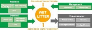 wet litter