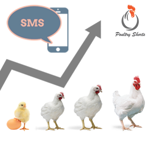 Broiler Rate Daily SMS